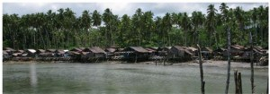Coconut photo1